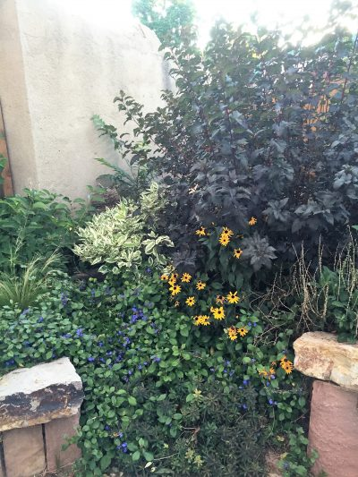 Colorado Native Garden