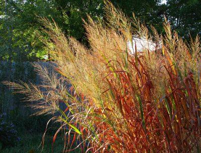 Colorado Native Plants